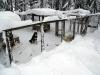 Hundgårdarna med massa snö. Zipp, CD och Luna skymtar