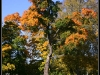 Höstträd vid Hjulet