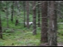 Skogshundar